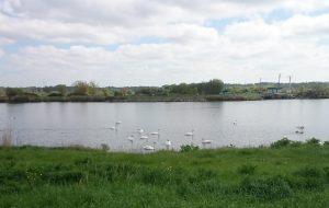 Cygnes sur la Vilaine